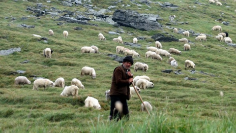 В Саратове осужден разбойник, застреливший пастуха