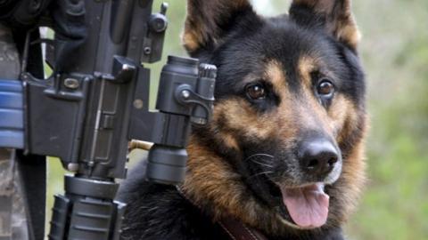 Служебная собака унюхала похитителя дамской сумочки