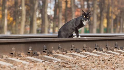 ПривЖД провела второй этап конкурса на лучшее сочинение о железной дороге