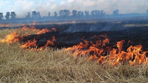 От сухой травы загорелись три садоводства в Саратове