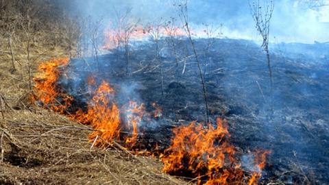 Чиновники убеждают саратовцев не поджигать прошлогоднюю траву