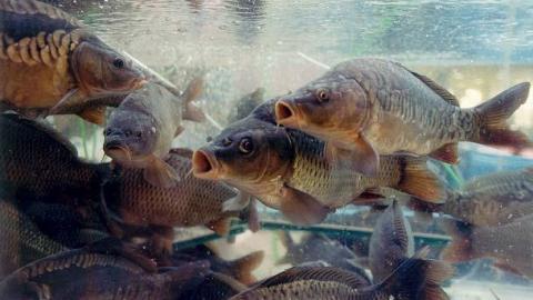 С 20 апреля в Саратовской области рыбачить разрешат только с берега