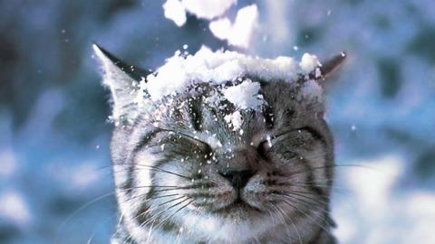 Госавтоинспекция информирует о проблемах со снегом на саратовских дорогах