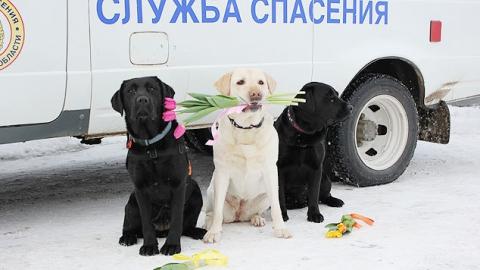 Саратовские спасатели собирают деньги на лечение собаки-чемпиона Даши