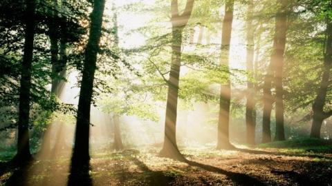 Саратовский лесхоз неэффективно освоил 5 миллионов рублей