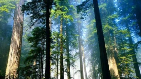 Прокуратура не дала саратовцу купить 27 соток леса