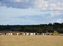 Концепция поддержки сельхозпроизводителей станет законом
