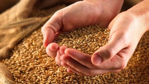 В этом году в Саратовской области планируют собрать 4 млн тонн зерна