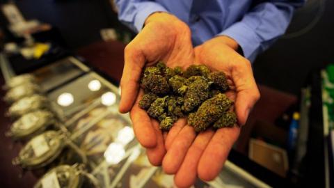 В Саратове задержан собиратель марихуаны на заброшенной ферме
