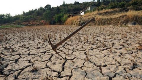 Засуха нанесла саратовским фермерам ущерб в 4,6 миллиарда рублей