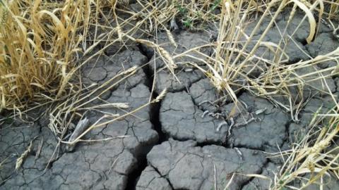 В зону действия ЧС вследствие засухи попал 31 район Саратовской области