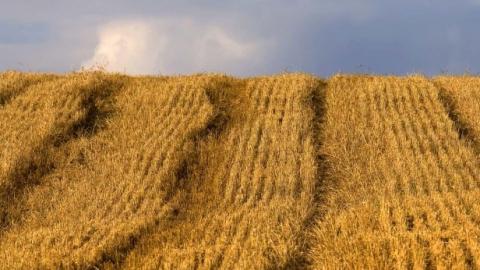 Потери саратовских аграриев от засухи вдвое превысили сумму федеральной поддержки