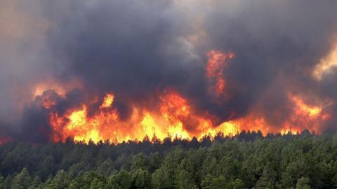 За сутки в Саратовской области прибавилось пять пожароопасных районов