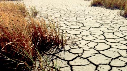 Валерий Радаев поехал в пострадавшие от засухи села