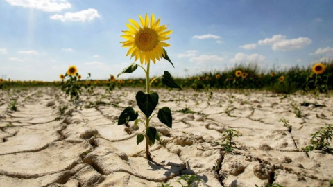 """Валерий Радаев пообещал фермерам """"сопротивляться непростым погодным условиям"""""""