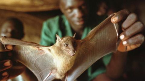 Президент объявил благодарность саратовским ученым за борьбу с лихорадкой Эбола