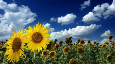 Синоптики обещают Саратову последний по-настоящему летний день