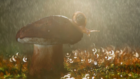 Саратовцам на предстоящей неделе обещают тепло и дожди