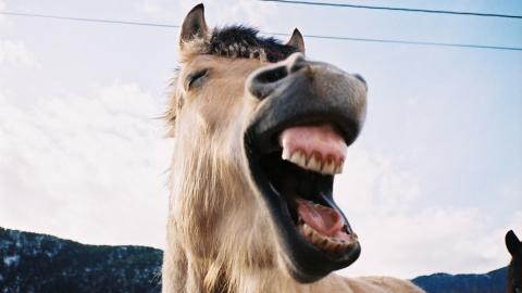 """В Аткарске лошадь покусала красную """"восьмерку"""" работницы заправки"""