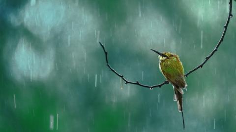 В Саратове возможен дождь на весь день