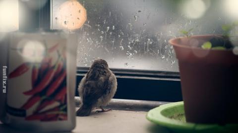 В Саратове намеревается обосноваться дождливая осень