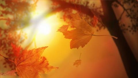 Саратовцам обещают теплый солнечный осенний день