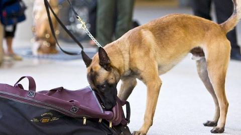 Медуниверситет эвакуировали из-за подозрительной сумки