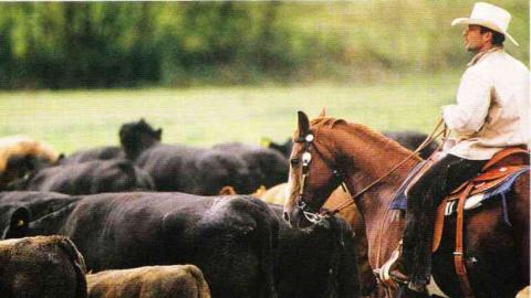Пастух на лошади запутался в стремени и утонул