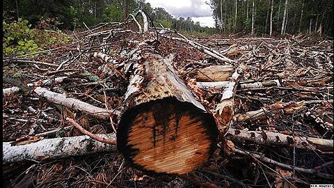 В лесу под Аркадаком на лесоруба упало дерево