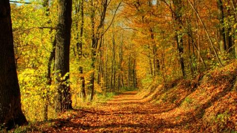 Пропавшую под Аткарском девушку нашли закопанной в лесу