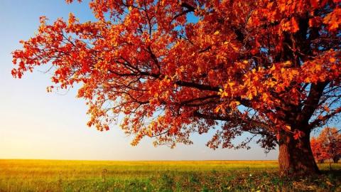 Саратов и область ожидают солнечные и тихие выходные