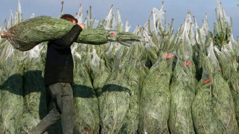 Елочные базары в Саратове начнут работать 15 декабря