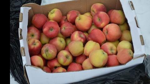 В Саратове уничтожили 62 килограмма яблок неизвестного происхождения