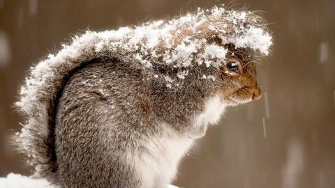 В Саратовской области ожидается -30 и новые снегопады