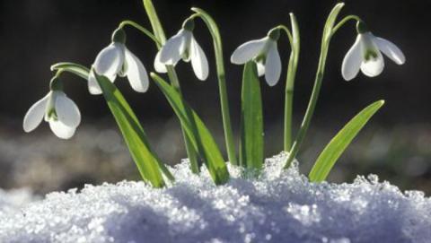 Всю неделю в Саратове будет гололедица и дожди с мокрым снегом