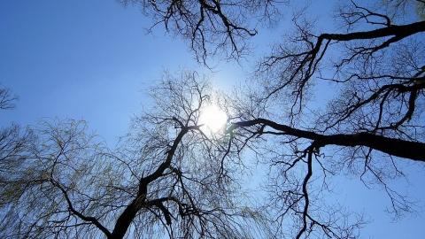 4 февраля в Саратове выглянет солнце и будет тепло