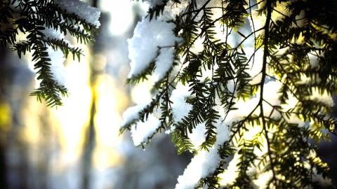 11 февраля в Саратове становится холоднее