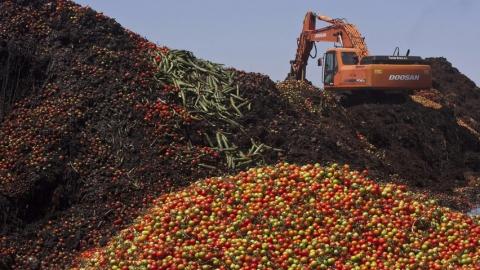 В Россельхознадзоре уничтожили более 1,5 тонн подкарантинных продуктов