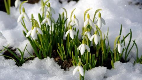Саратов ждет аномально теплое 8 марта