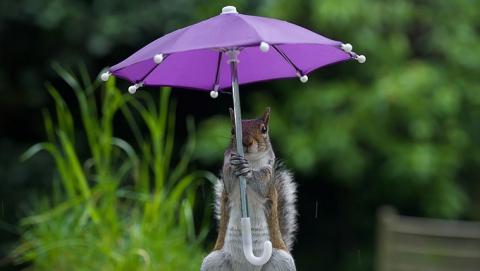 9 марта в Саратове выдастся пасмурным и дождливым