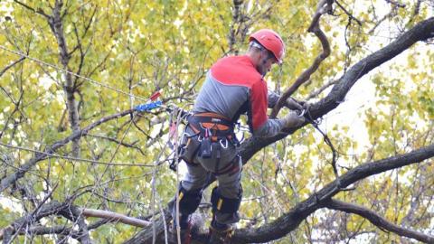 Рабочий во время опиловки деревьев лишился скальпа