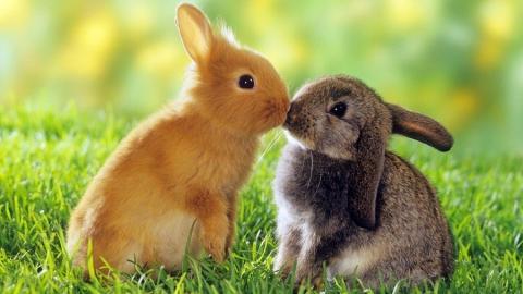 Полицейские спасли похищенных кроликов
