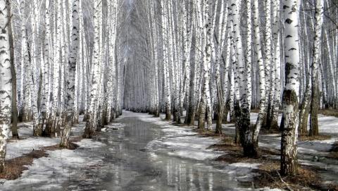 На выходных в Саратове будет тепло и сыро
