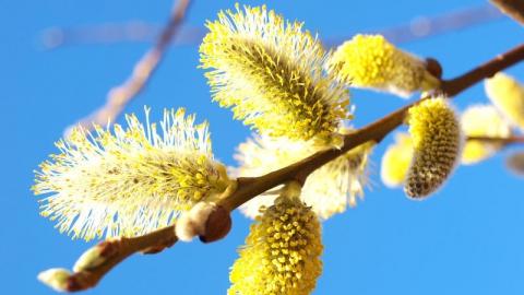 7 апреля в Саратове будет ясно и тепло