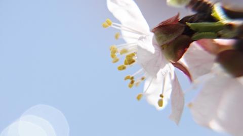 18 апреля в Саратове будет солнечно и не жарко