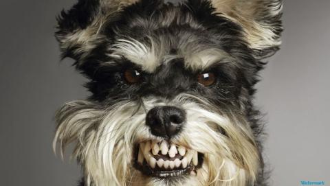 Жители Жасминки сообщают о нападении бешеной собаки. Трое в больнице