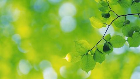5 мая в Саратове будет теплым и ясным днем