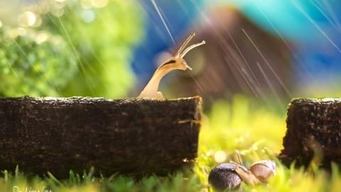 20 мая в Саратове больше не предвидится дождей