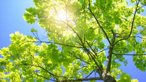 23 мая в Саратове будет теплым солнечным днем
