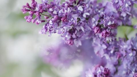 26 мая в Саратове будет до +25 без дождя